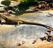 Eddie The Lizard by Hazel Dean