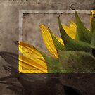 Vintage Sunflower by krddesigns