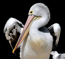 Pelican VIX by Tom Newman