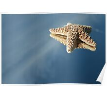 StarFish Reflections Poster