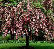 I Love My Tree.... by Patty Boyte