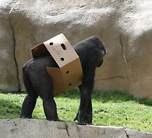 Chimp by the box by Fred Barber
