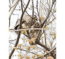Great Horned Owls #1 - Mama and Owlet Photographic Print