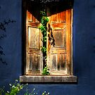 A Window On Tucson by Lois  Bryan