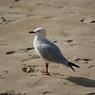 Gull by ScottyL