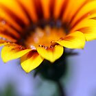 Life is a Flower by MissElenaT