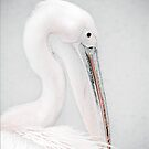 Pelican by PhotoDream Art