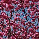 Summer Flowers by AravindTeki