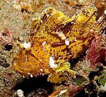 Leaf Scorpionfish (4) by Marcel Botman