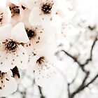Winter Flowers by Sophie Gonin