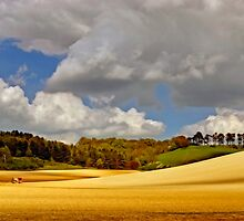 North Downs Way 5 by gollum1985
