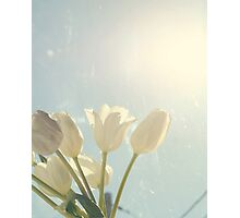 Tulips And Blue Sky Photographic Print