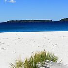 Grass detail I  Captains Beach Jervis Bay by danav