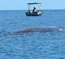 The Arrival - Humpback Whale by Barbara Burkhardt