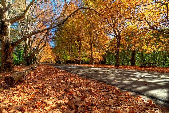Mount Wilson The Glorious Colours of Autumn NSW Australia by DavidIori