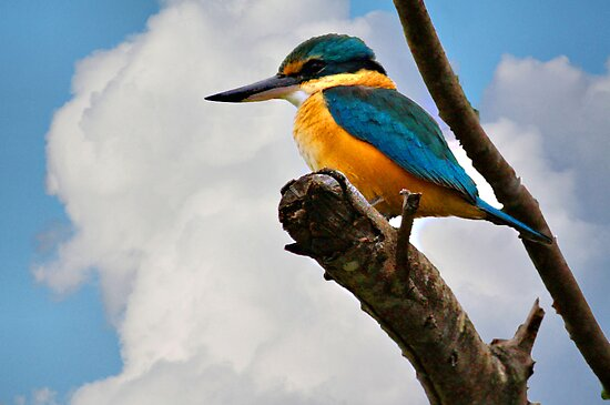 """KINGFISHER"" by Sue  Fellows"