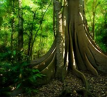 Fig Forest by Michael Howard