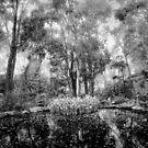 Misty pond by Alexander Meysztowicz-Howen
