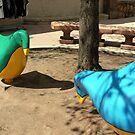 Feeding the Birds by Anita Schuler