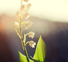 Sunkissed Sweeties by MichelleOkane