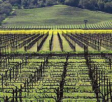 Patterns Napa Valley by Robert George