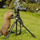 groundhog photography by gregsmith