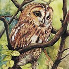 Owl from Butterfingers and Secrets by morgansartworld