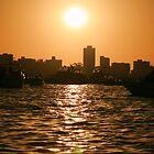 Swan sunset by helenrose