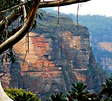 Blue Mountains NSW Australia by Bev Woodman