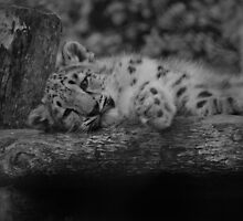 Cub in Black and White 3 by DanielTMiller