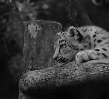 Cub in Black and White 4 by DanielTMiller