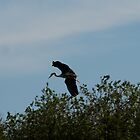 Flight of the Heron 2 by dougie1