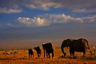 Kilimanjaro and Elephants at Sundown. Amboseli, Kenya, Africa. by photosecosse /barbara jones