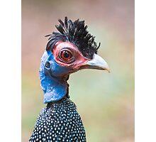 Guinea Punk Photographic Print