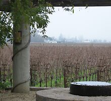 Heitz Vineyards by foxinabox