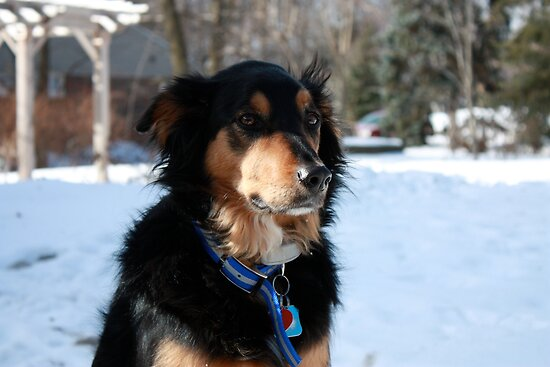 Maddie, the Canadian Guard Dog by Newsworthy