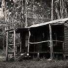 Bush Shack by Paul Moloney