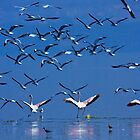 Flamingos in Flight, Lake Nakuru National Park, Kenya, Africa. by photosecosse /barbara jones
