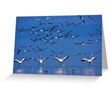 Flamingos in Flight, Lake Nakuru National Park, Kenya, Africa. Greeting Card