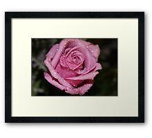 *Pink Rose* Framed Print
