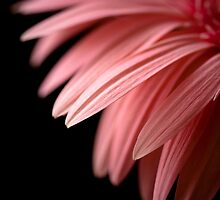 Pink Passion by Kate Baumgartner