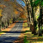 Mount Wilson The Colours of Autumn NSW Australia by DavidIori