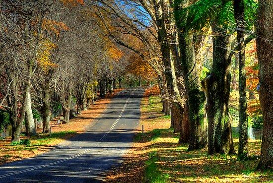 Mount Wilson The Colours of Autumn NSW Australia by DavidIori