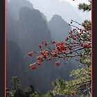 Huangshan berries by Coastalbloke