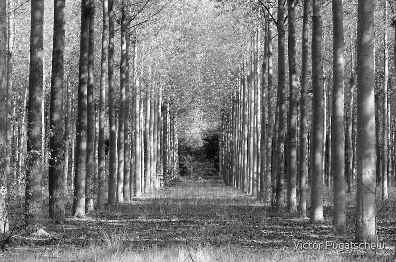 Forest Light. by Victor Pugatschew