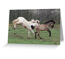 Fillies playing 1 Greeting Card