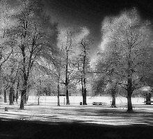 WP SNOW by dvande1