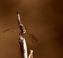 Brown Dragonfly by Dreebs