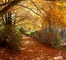 Autumn Pathway 2 by heidiypi1