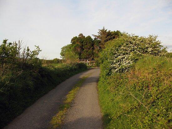 Rural Irish road by John Quinn